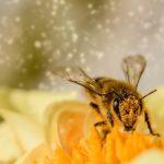 花粉も撃退します!断熱リフォームの威力